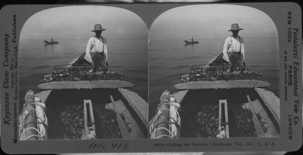 'Gallring av ostron. En man ombord i en eka med ostronfångst. I bakgrunden ytterliagre båt med person stående ombord. ::  :: ''6874 - Culling the Oysters, Chesapeake Bay, Md., U.S.A.'' ::  :: Ingår i serie med fotonr. 315-422. Se särskilt fotonr. 407 och 421.'