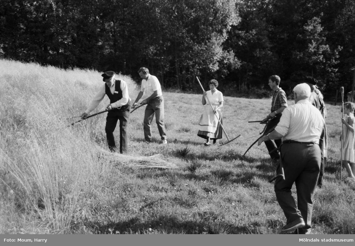Lindome Hembygdsgille firar 20-årsjubileum på Börjesgården i Hällesåker den 23 juli år 1983. Slåtter med lie samt räfsning.  För mer information om bilden se under tilläggsinformation.