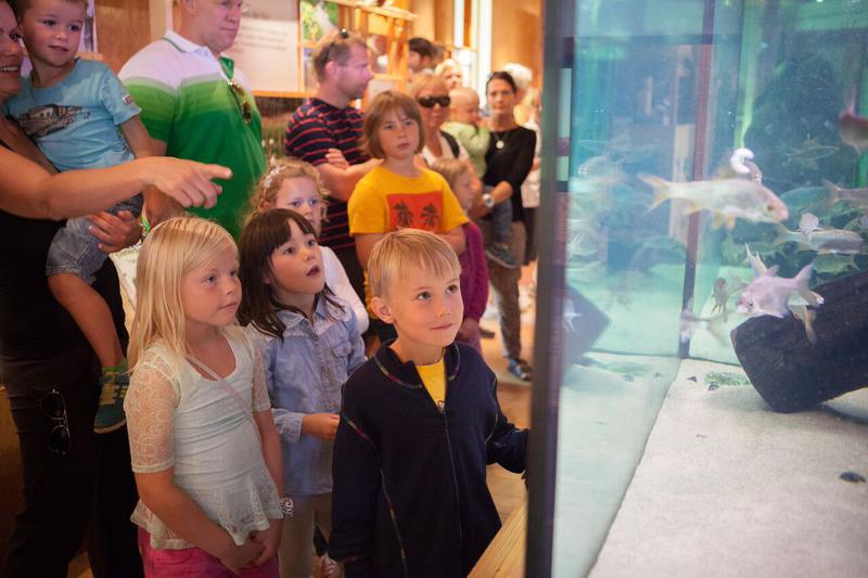 Mange barn som kikker på store akvarier (Foto/Photo)