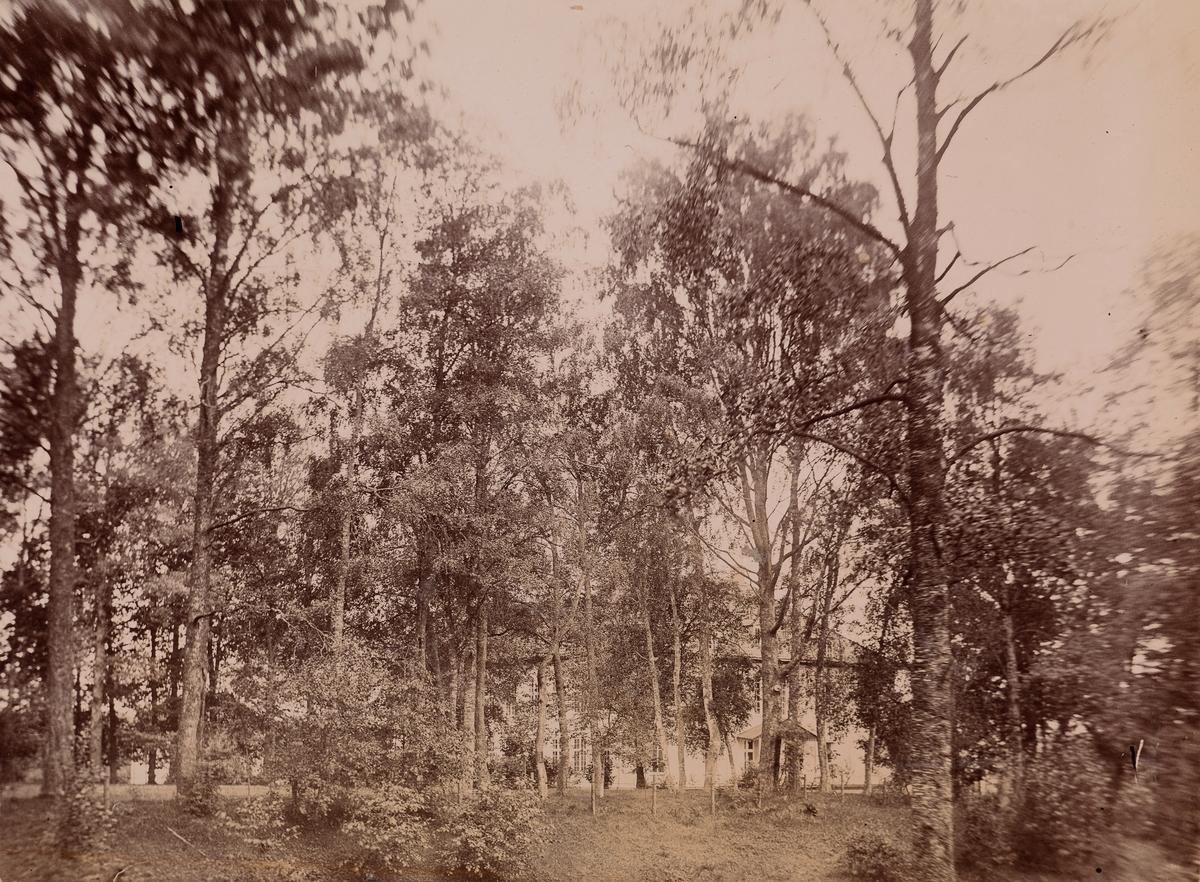 Trolig Eidsvollbygningens bakside bak trær.