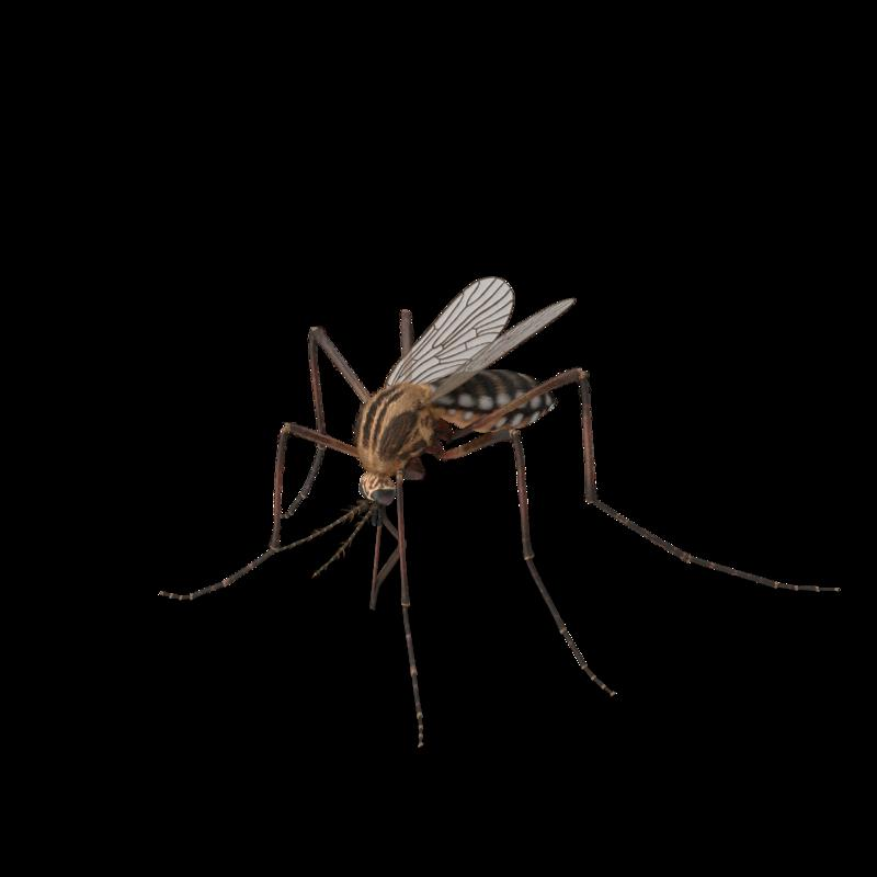 Mosquito.G03.2k.png