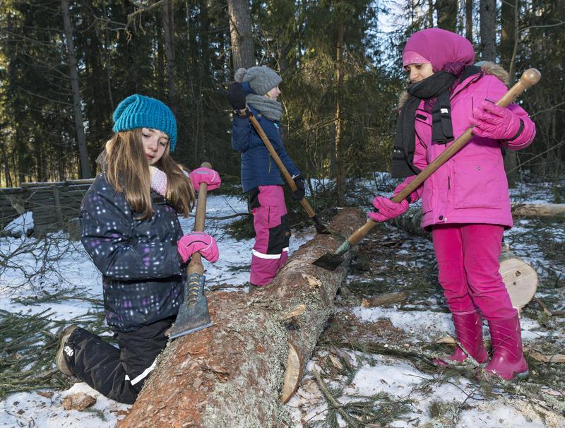 Skoleelever barker tømmer under temadagen fra stubben til tømmervelta 15/2 2016 (Foto/Photo)