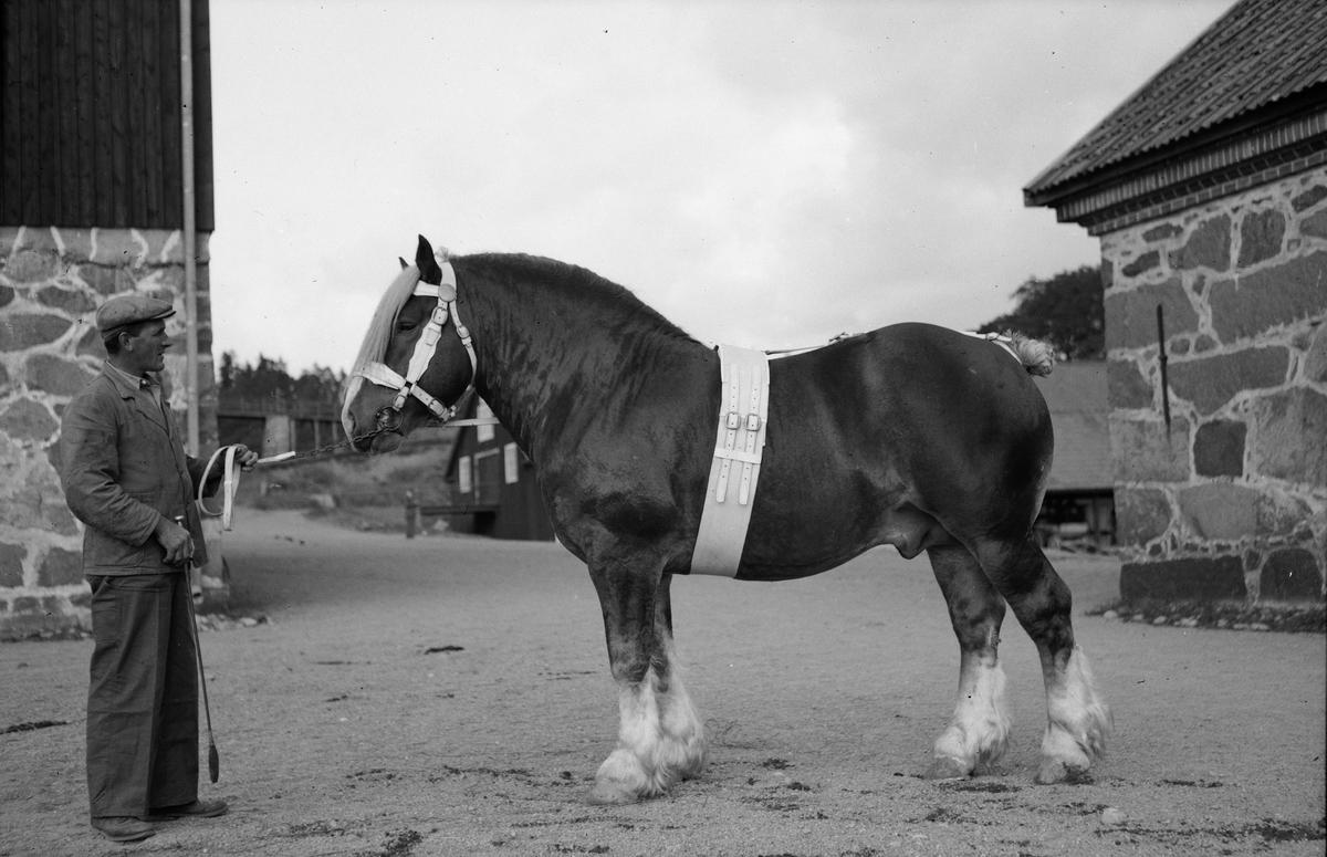 Man och häst, Uppland, sannolikt 1940-tal