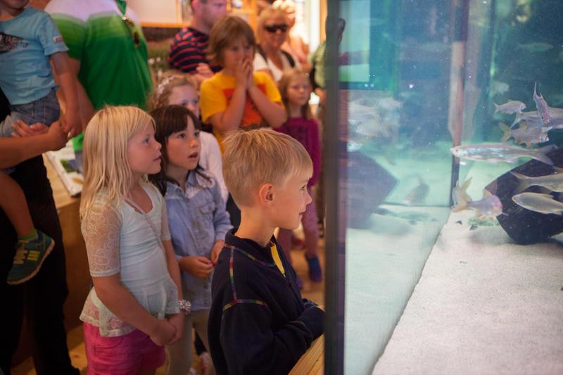 Foto av barn som ser på fiskene i akvariet