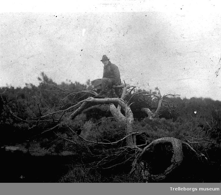 Olof Christofferssons foto, träd negativ 1987-28:9-10.