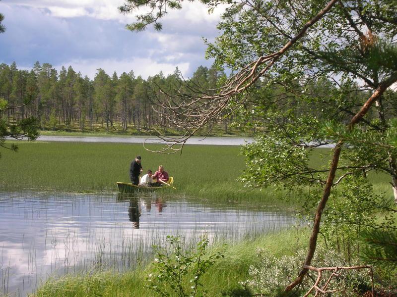 Sivslått (Foto/Photo)