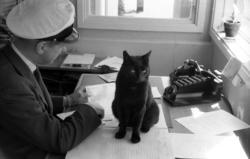 Katten Englund var en välbekant syn vid Sundsvalls centralst