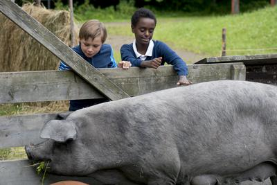 Two boys greets a pig in a pen