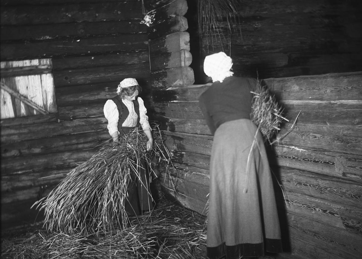 Väggslåning av råg i Bjurbäcken, Mangskogs socken, Jösse härad i Värmland.