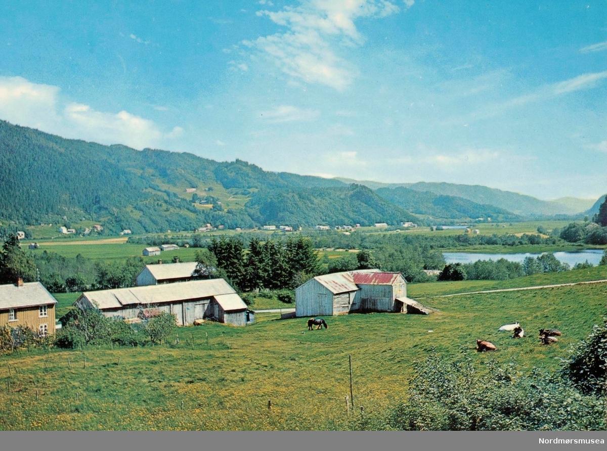 """Postkort """";F-5425-2""""; med motiv fra Surnadal kommune. Kortet er utgitt av Knut Aune kunstforlag A/S. ku, kyr, dyr, oversiktsbilde, fjell,  Fra Nordmøre Museums fotosamlinger."""