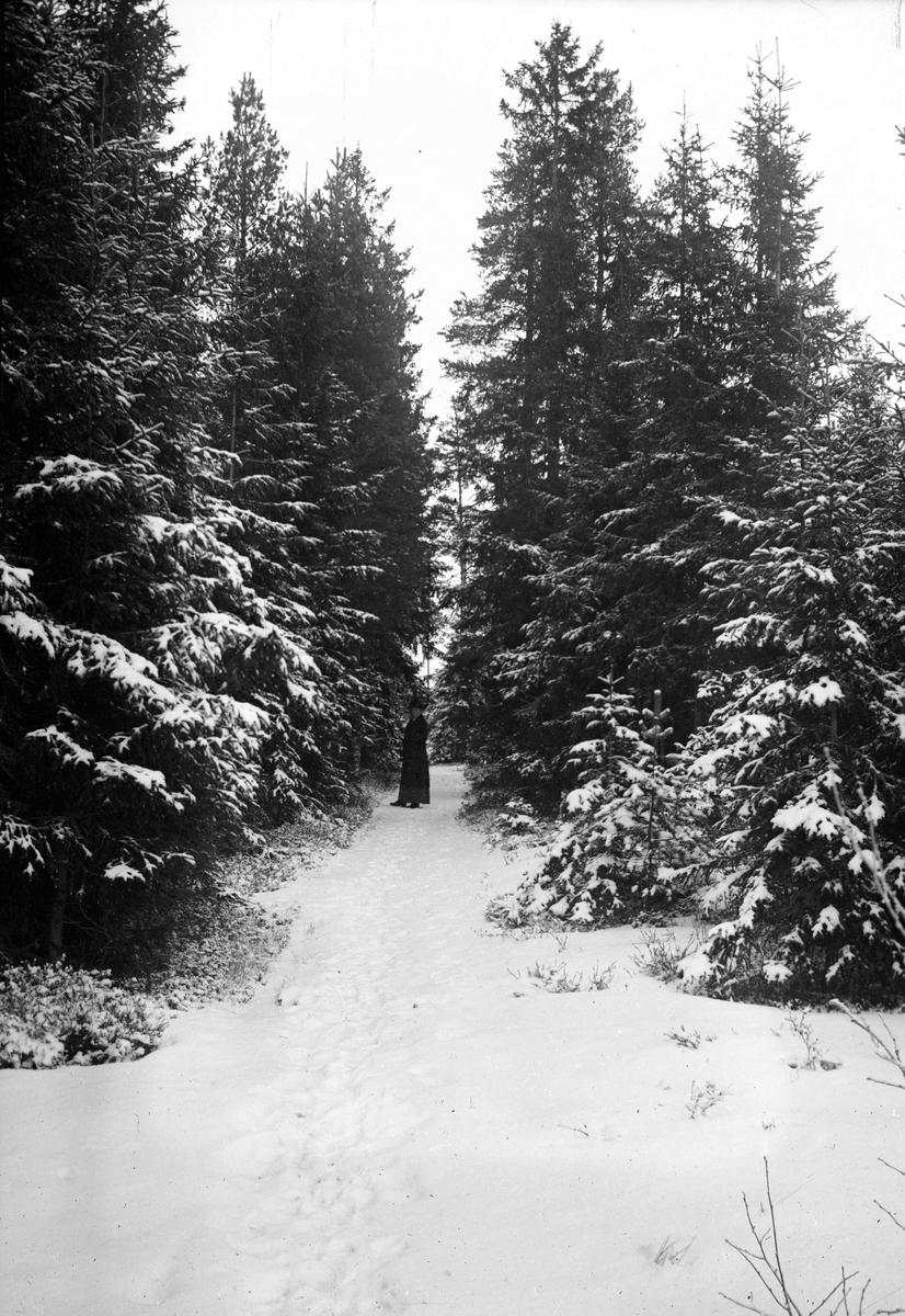 Vinterväg i skogen. Tidsomfånget är 1900 - 1940