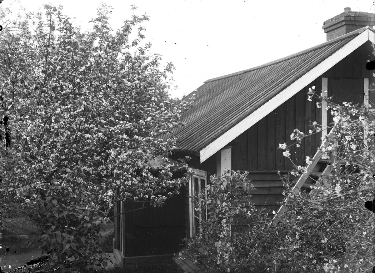 Hus och trädgård, okänd plats.