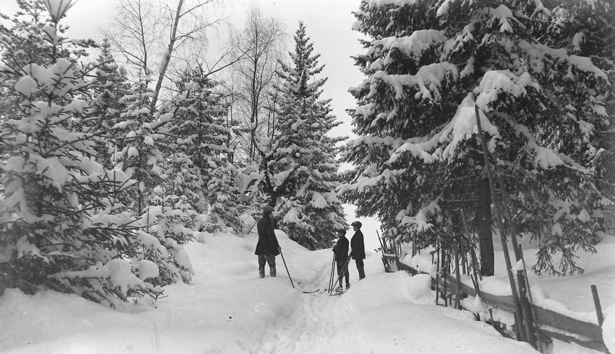 Skitur, vinterskog,skigard ,friluftsliv, ukjent sted.