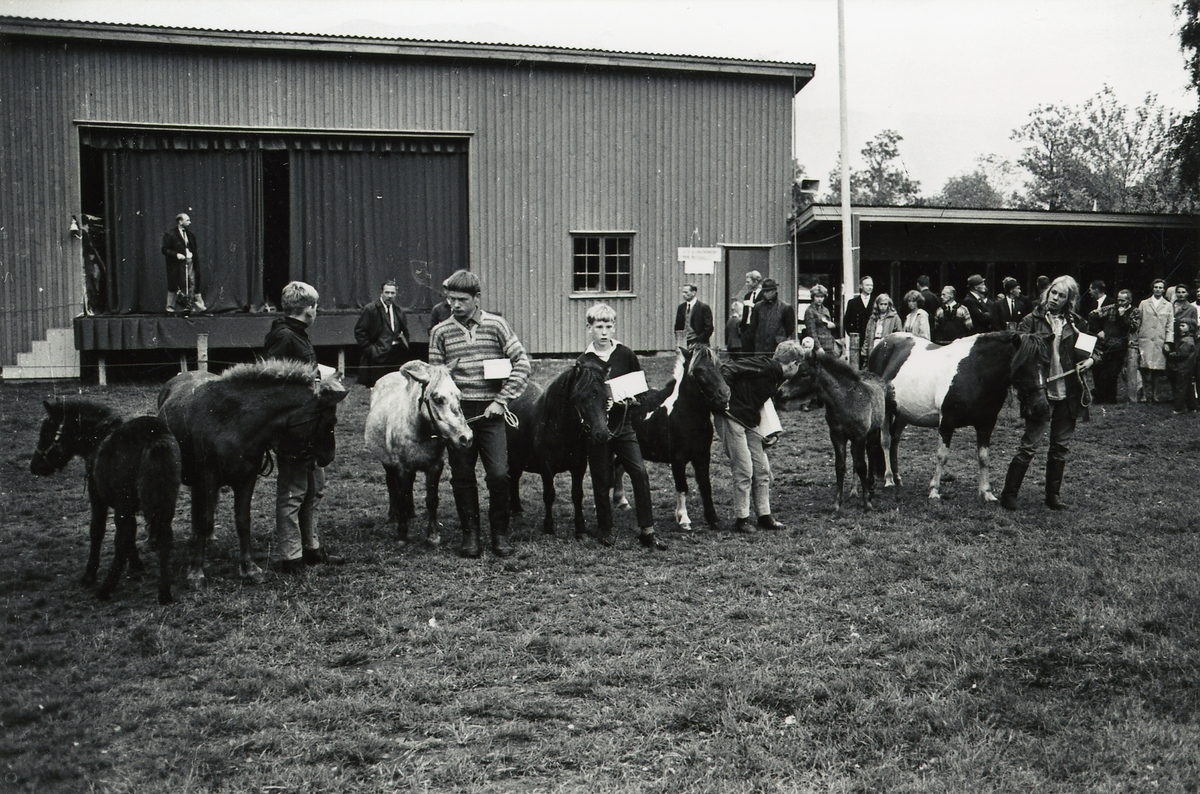 Premiering av pony