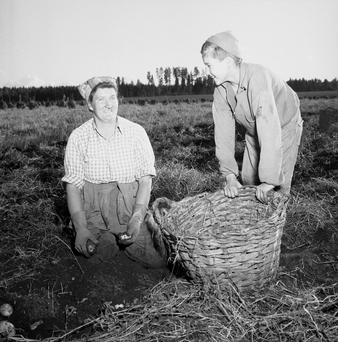 Skyllberg. Bildsidan.1 oktober 1955.
