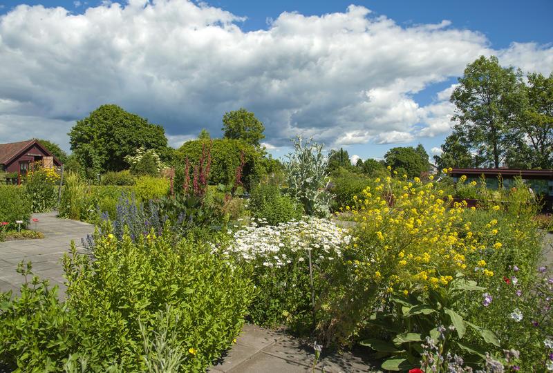 Blomsterbed med store planter med gule og hvite blomster.