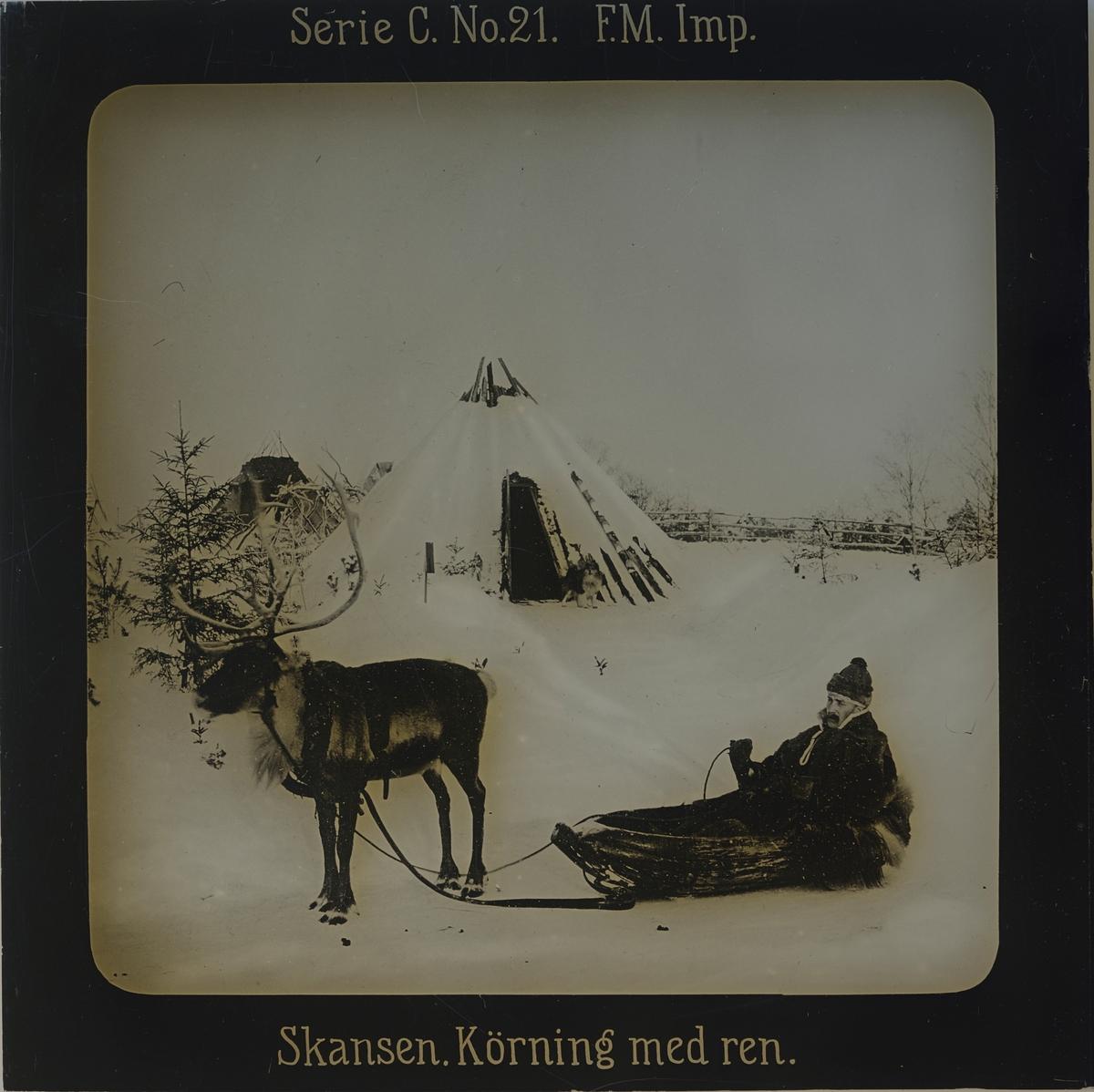 Samevistet, vinterbild. I förgrunden ren, ackja och en man iklädd samisk dräkt. I bakgrunden kåtor.