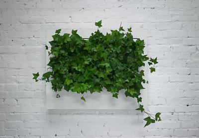 Veggramme med grønne planter, designet av polske Florabo (Foto/Photo)