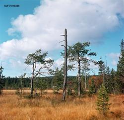 Myrlandskap fra Nordre Osen i Åmot kommune i Hedmark.  Fotog