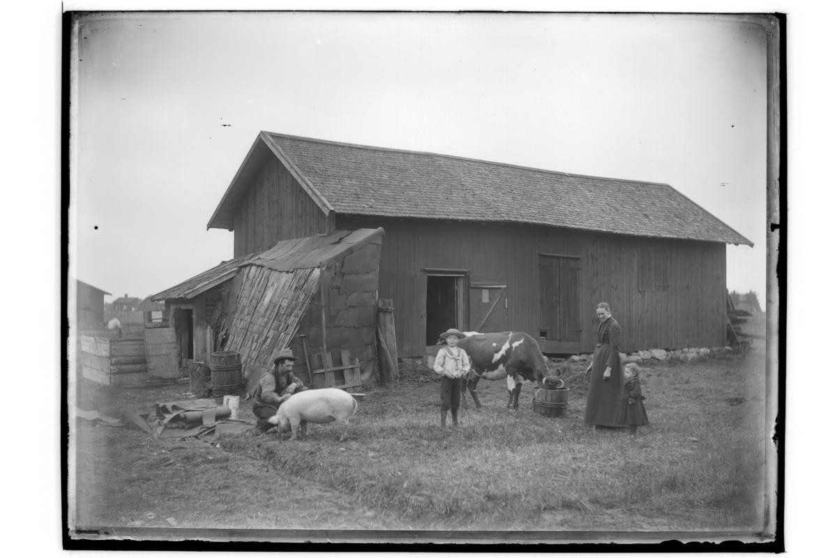Ekonomibyggnad, 4 personer, en gris och en ko.Adolf BroströmPer-Adolf Broströms familj: sonen Fritjof Broström och dottern Ingeborg Broström.