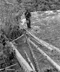 Tømmerfløting like nedenfor kraftverksdammen i Kvernfallet i