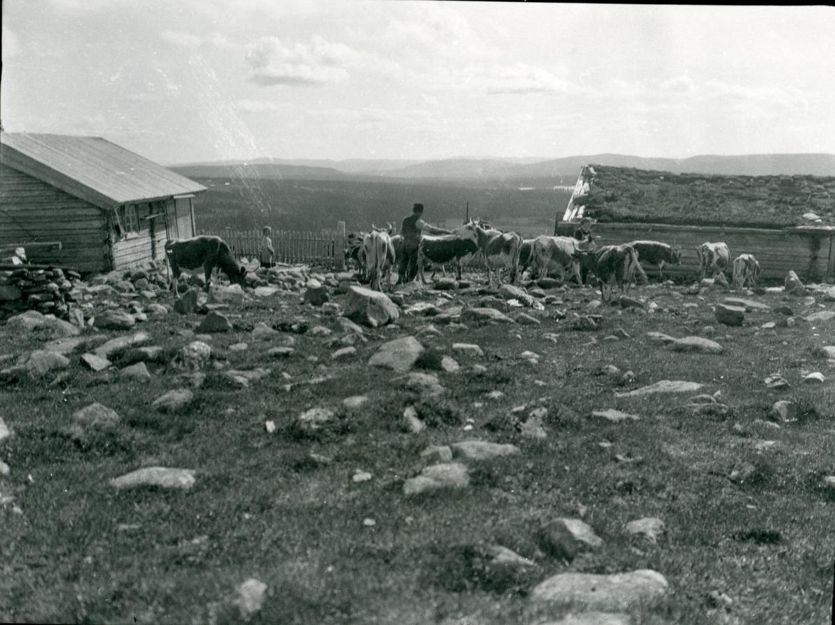 Setra Listerud på Høvreslia, Bu og fjøs og krøtter på trøa.
