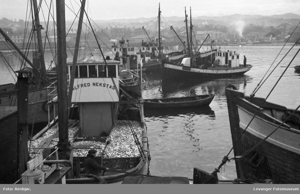 Sildefiskere i Levanger havn, båten Alfred Nekstad.