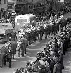 Cirkus Scott på St: larsgatan år 1950