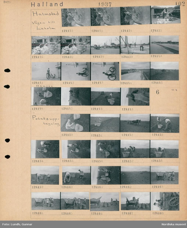 Motiv: Halland, Halmstad, Vägen till Laholm; En kvinna vattnar i en trädgård med en vattenkanna, en man står vid ett försäljningsstånd med keramik och hinkar och korgar, vy över hamn med fartyg, en grupp män staplar virke på ett fartyg, stadsvy med en kaj, en kvinna med cykel i hamnen, en bil på en väg, ett hästdraget jordbruksredskap, pojkar plockar potatis, porträtt av en kvinna.   Motiv: Halland, Potatisupptagning; En kvinna plockar potatis, en man kör ett hästdraget jordbruksredskap, två kvinnor bär en korg på en åker, kvinnor tömmer en korg med potatis i en vagn, två pojkar sitter i en vagn med potatis.