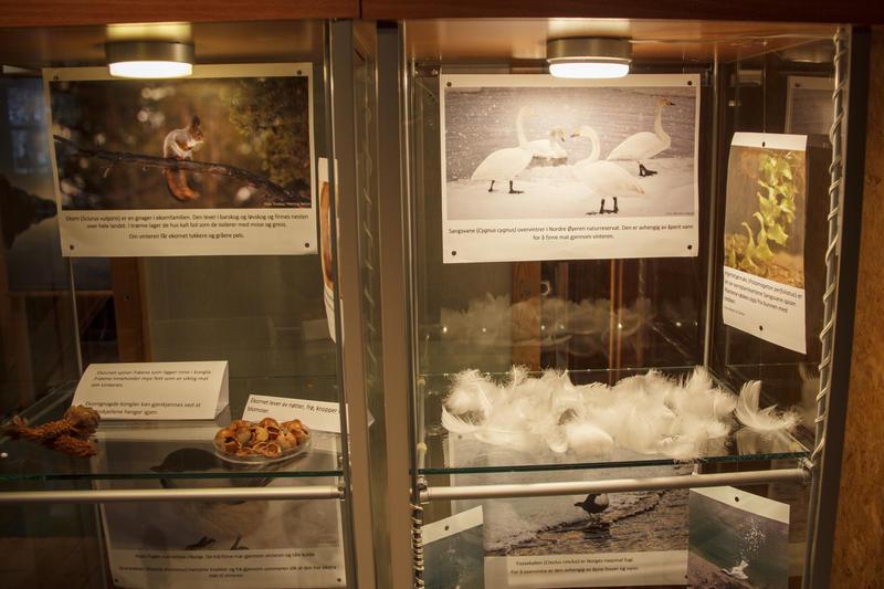 Foto av to glassmonter med utstilling om vinterliv