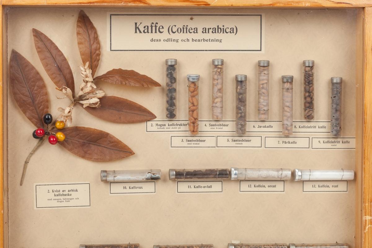 Kasse med glass foran. Innholdet viser dyrking og bearbeiding av kaffe.