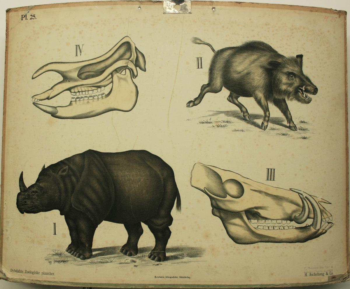 Nashorn og villsvin.