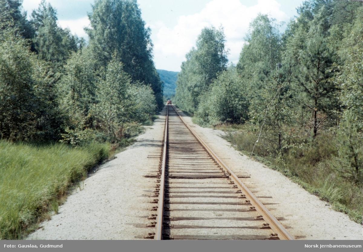 Epletveitsletta på Treungenbanen - NSBs skinnebil i bakgrunnen