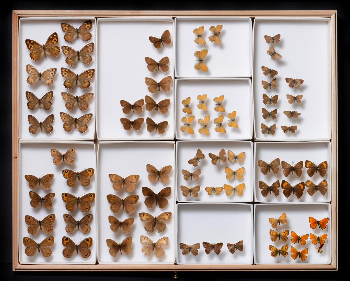 Naturhistoriske samlinger (MUST)
