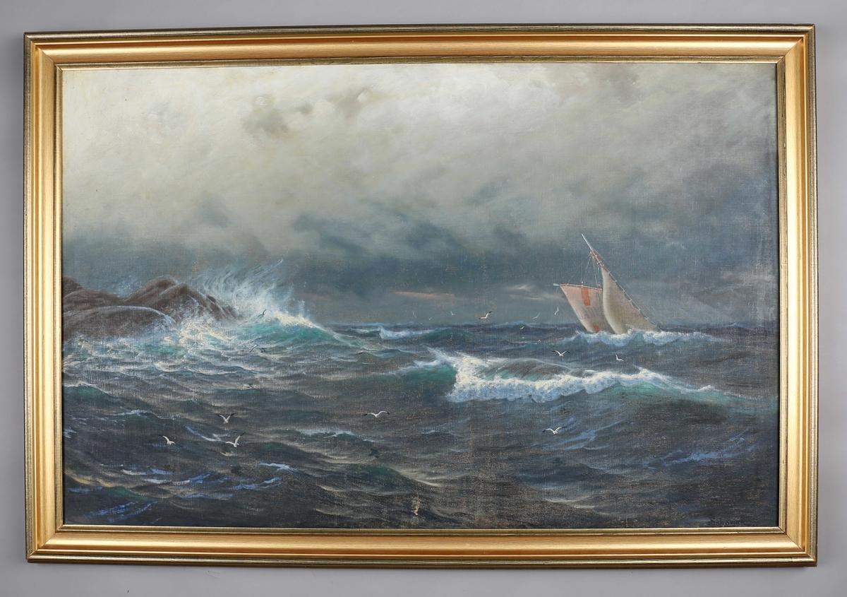 Oljemaleri av losbåt under seil på opprørt hav, muligens fra Larviksfjorden. Motivet viser kystlandskap med brenninger, hvite måker.
