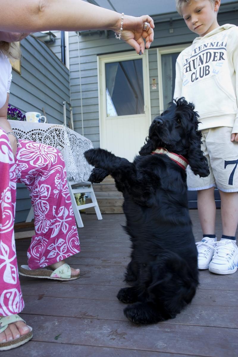 Hunden Emmy sitter for å få en belønning fra sin eier men et barn i familien ser på.