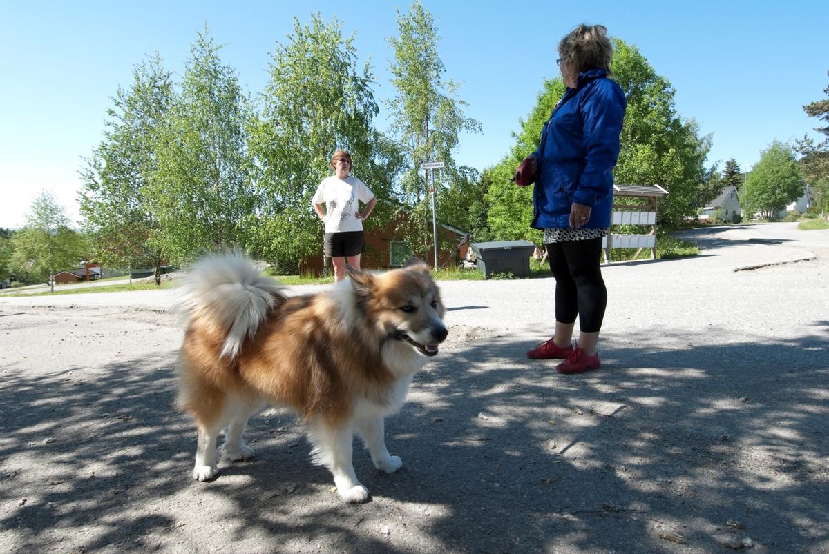 Hunden Romeo på tur med sin eier.