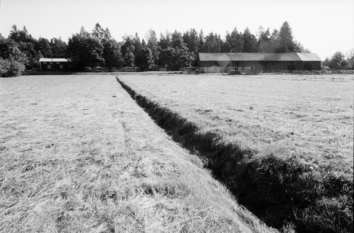 Odlingslandskap med dike, Lönnholmen, Gräsö socken, Uppland 1994 - 1995