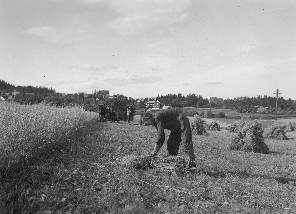 Skuronn i Malvik og Ranheim