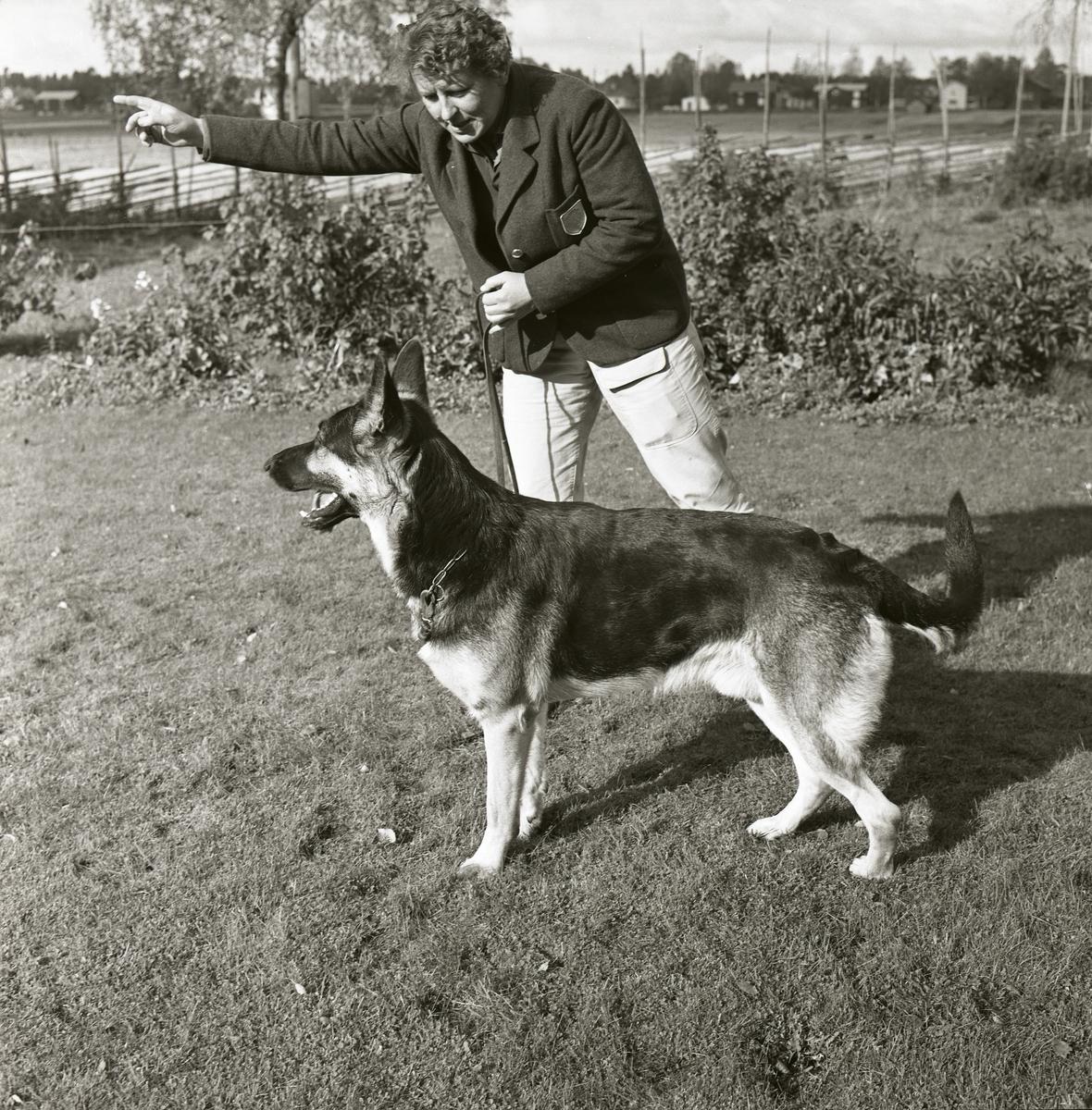 En person står med en schäferhund i koppel på en gräsmatta, oktober 1964.