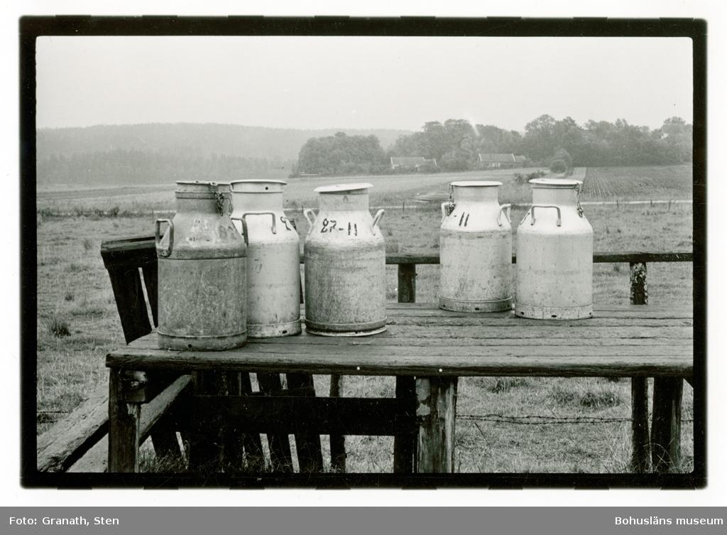 Fem mjölkflaskor står på en mjölkbord. I bakgrunden syns ett disigt jordbrukslandskap. De fyra flaskorna till höger är tillverkade av aluminium som var en lättare metall än vad tidigare flaskor var gjorda av. Denna typ av flaskor användes vid leverans av mjölk från gård till närbeläget mejeri. Dessa tillhör gård 27-11, och har körts tillbaks efter dagens leverans.