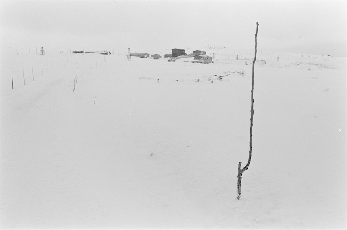 Snødekte bygninger ved Røros.