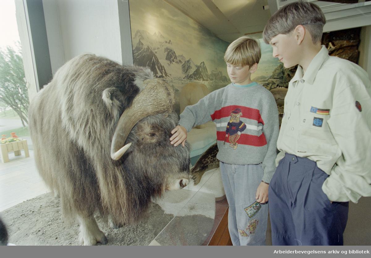 Bygdøy Folkemuseum. Fram-museet. Sebastian og Dominikue fra Tyskland beundrer moskusen. 20. juli 1995