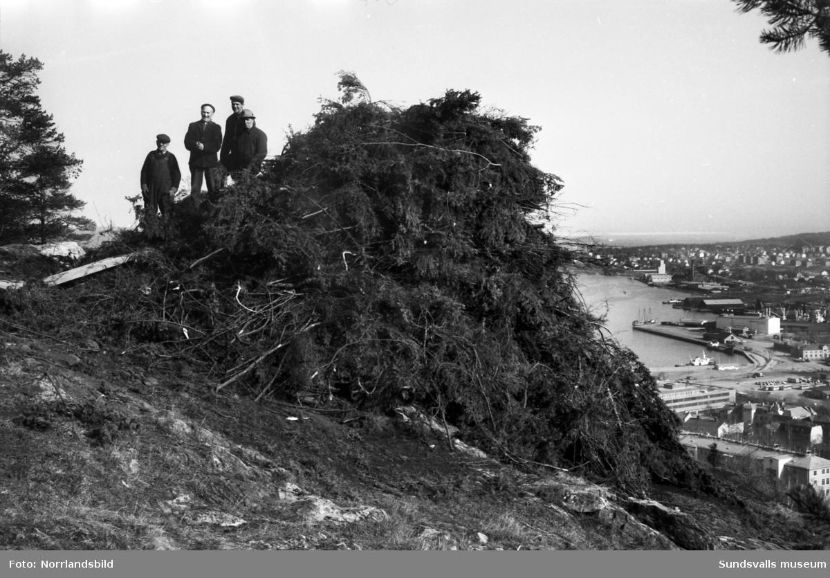 Valborgsmässoelden på Norra berget är förberedd, fyra män väntar på att få sätta fyr på bålet.
