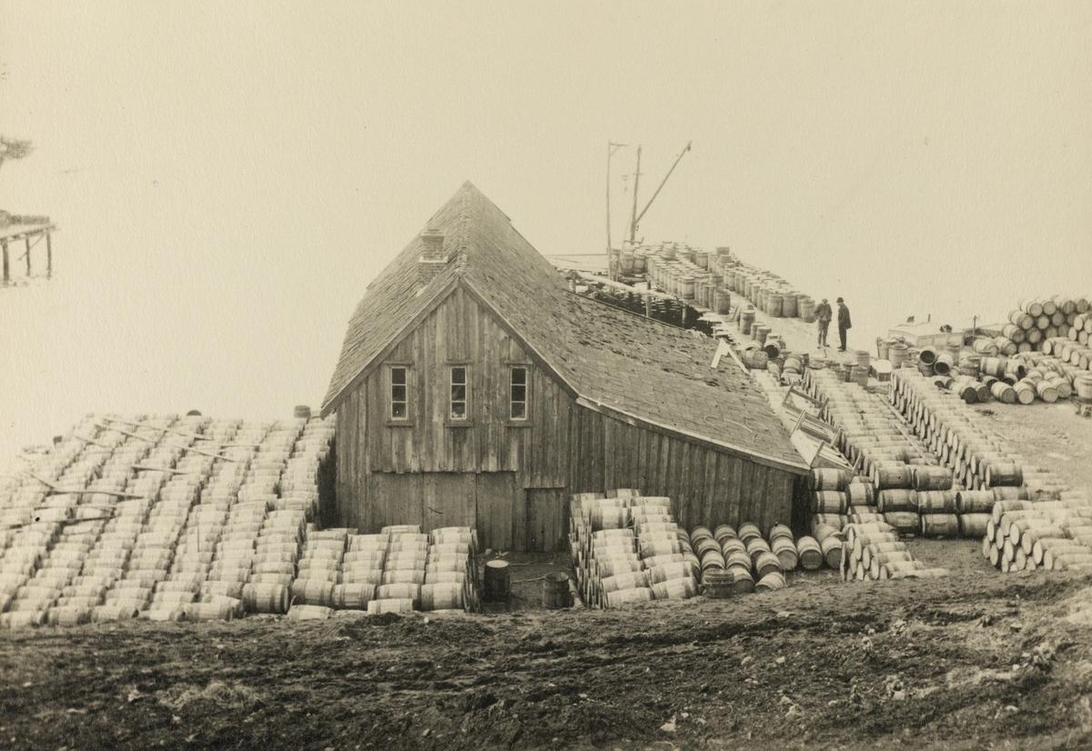 Omegnen III - Rossebø