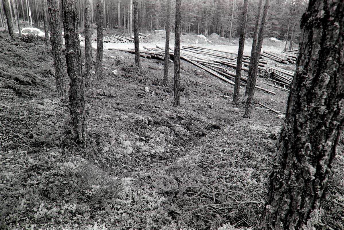 Tjæregraver, Frysjøsletta, Grue, Solør.
