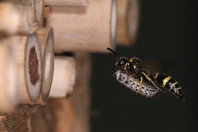 insektshotell.jpg
