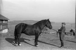 Løytnant Ottar Markeng mønstrer hest ved Hærens Hesteskole p
