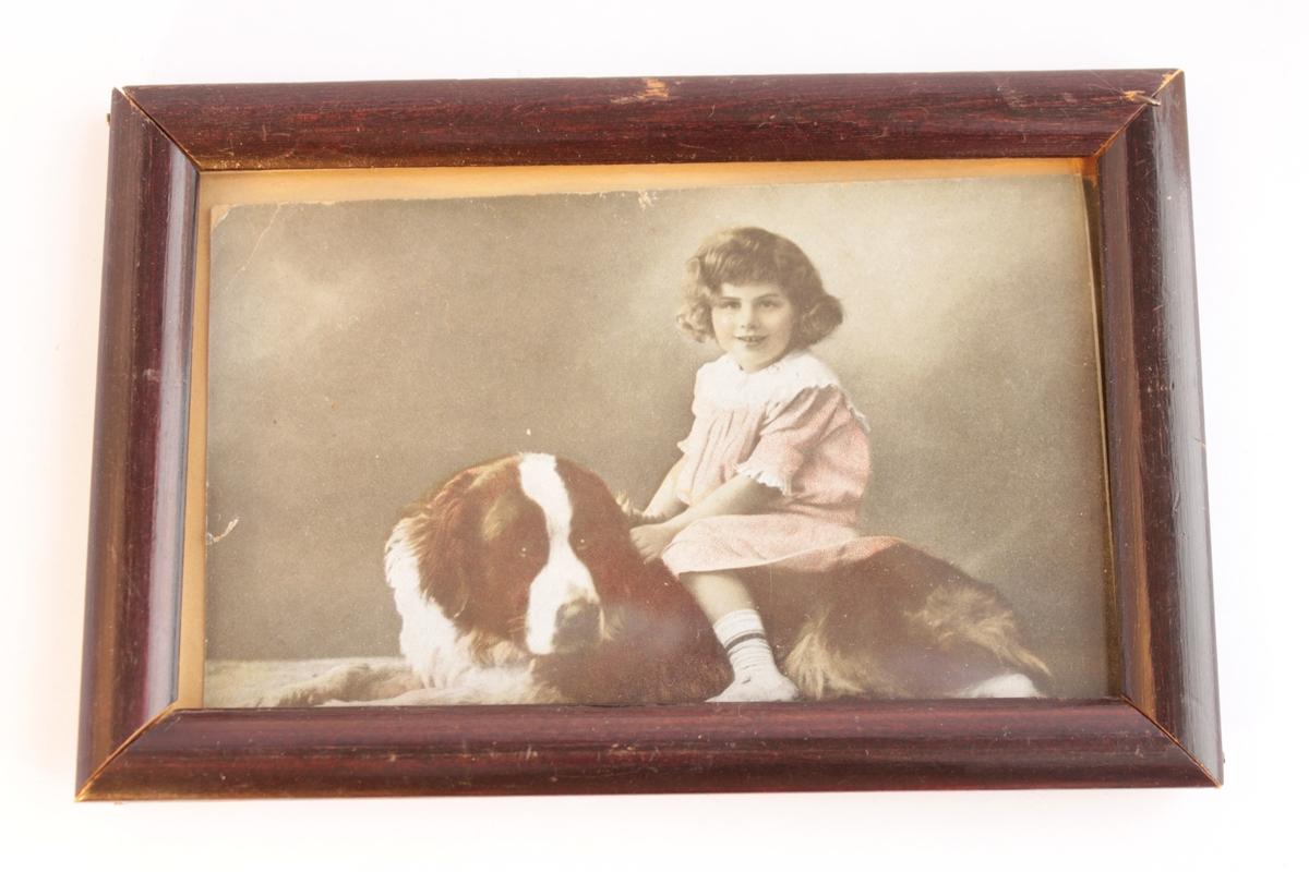 Kolorerat fotografi inramat bakom glas och en brunsvart enkel träram. Motivet föreställer en liten flicka i rosa klänning som sitter på en Sankt Bernhardshunds rygg.