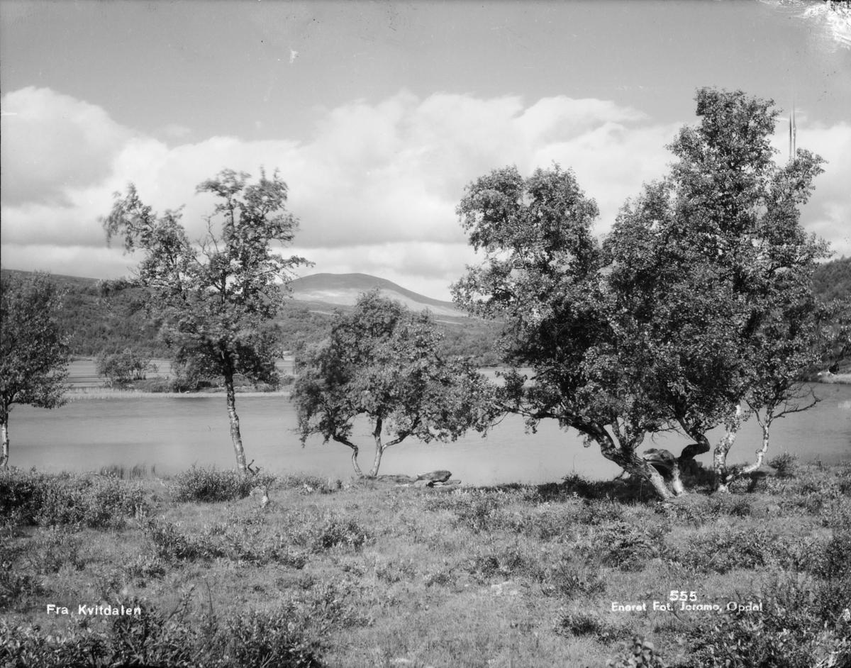 Dovrefjell, ved Kvitdalsvatnet med fjellbjørk. Påskrift: fra Kvitdalen